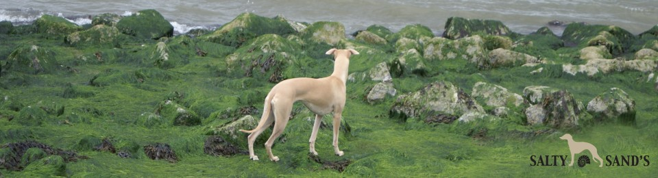 SALTY SAND'S WHIPPETS