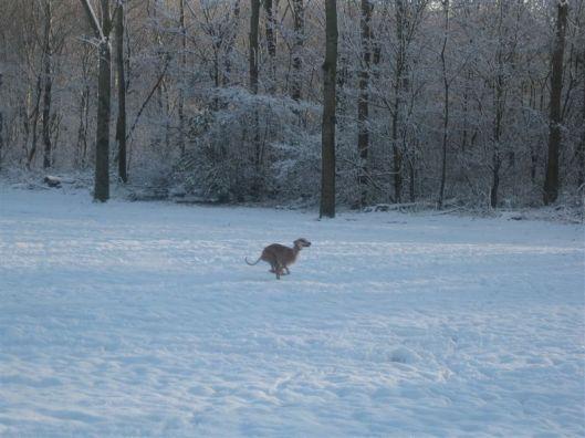 Sneeuw 11 dec 2012