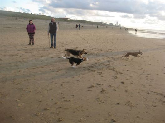 Strand 11 dec 2012