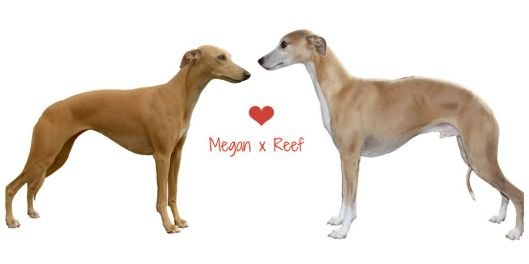 Megan en Reef hart verkleind
