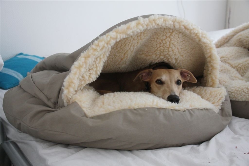 Dog Cave Bed For Whippets