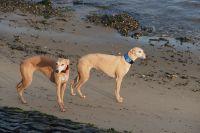 Hazel en Hinde