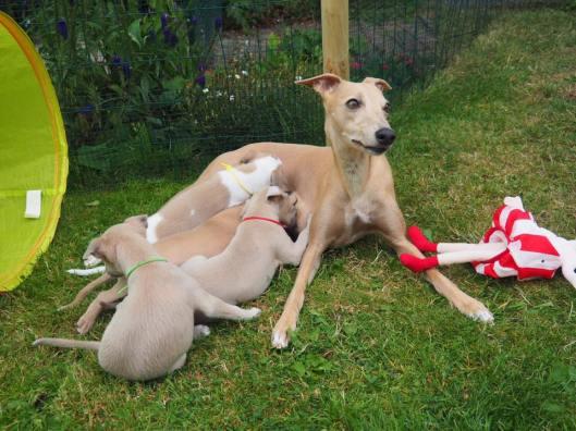Aprille en pups in tuin 2