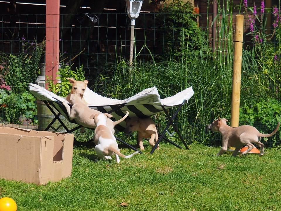 Spelen tuin