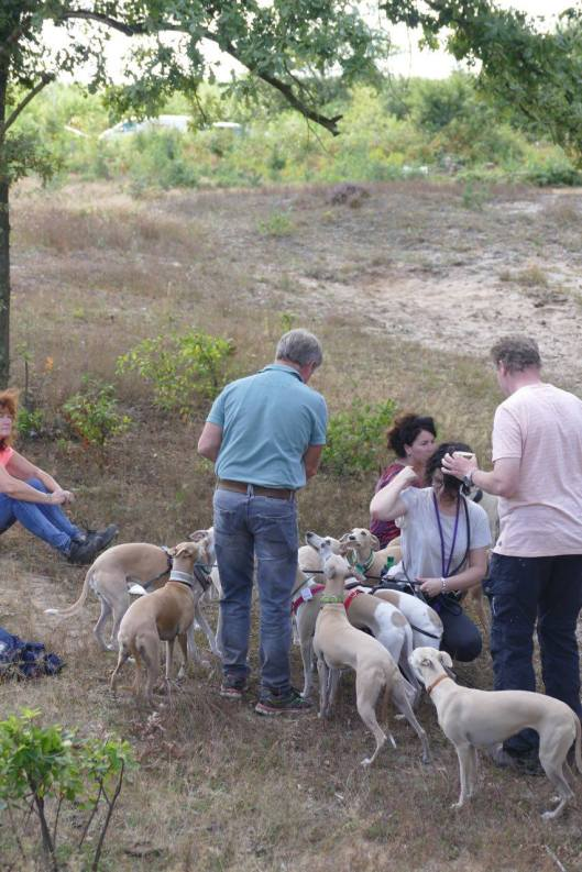 Arend honden voeren